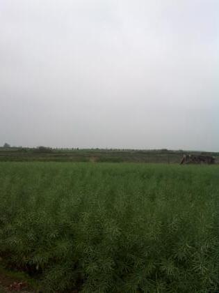 乡村好风景
